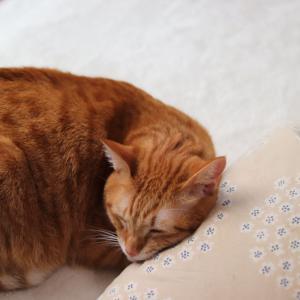 ■クッションで寝る猫■