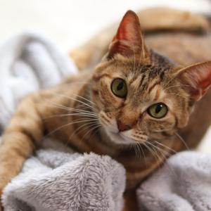 ■猫のふみふみをご堪能ください■