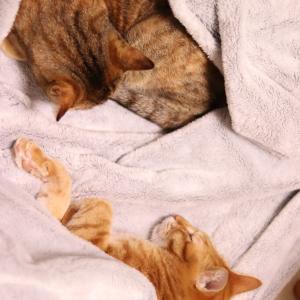 ■猫たちのお昼寝タイム■