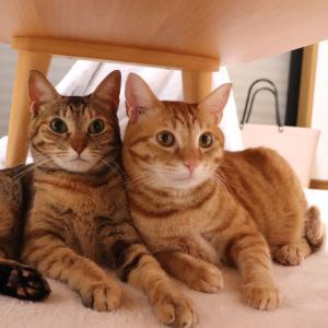 ■猫2匹のベストショット■