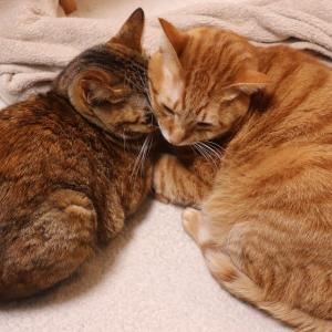 くっつきひっつき2匹の猫