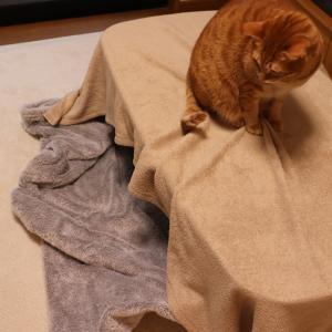 お留守番時の手作り猫ハウス?