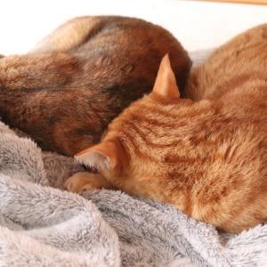 猫のシンクロ寝