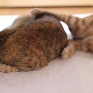 足グセの悪い猫