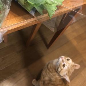 野菜泥棒がおりました
