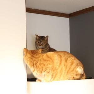 本日は、ネコ