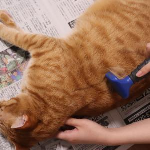 【猫の抜け毛対策】ファーミネーター