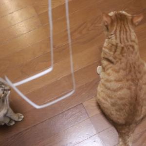 猫たちが夢中で遊ぶのはただのヒモ