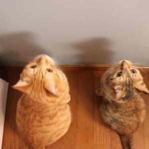 猫と遊ぶ時間