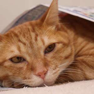 猫がいると新聞が読めません