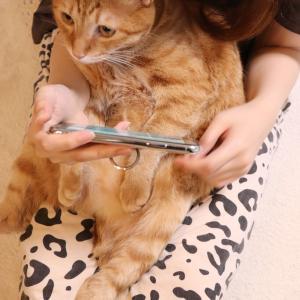 なんかおる!猫の動画に夢中