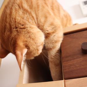 現場監督な猫