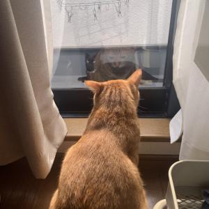 ベランダに黒猫ちゃんが遊びに来ます