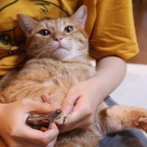 爪切りが好きな猫と、爪切りが嫌いな猫