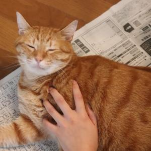猫の抜け毛がごっそり!ファーミネーター