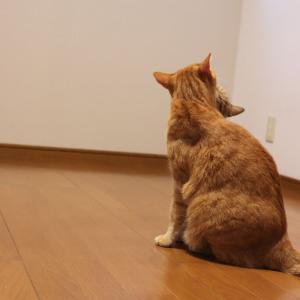 家の中に猫がいる不思議