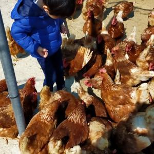 経験570:奈良県「農業公園信貴山のどか村」レビュー!① のどかに自然を楽しもう!