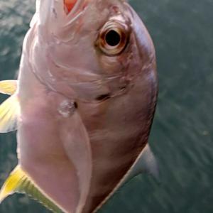いるのに釣れない時はこうすれば釣れる・・・事もある