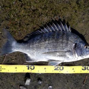 いかに釣れるとはいえ本当に釣るならこれ大事です