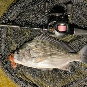 やっぱり狙った獲物がキッチリ釣れるのが理想かな