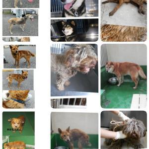 埼玉県保健所収容犬★多数★緊急