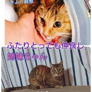 sさんの猫7頭について&川越猫の多頭飼育崩壊がまた