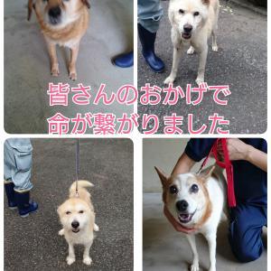 埼玉より緊急里親募集の犬たち★助かりました