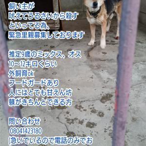 飼い主が殺すといってる犬★埼玉県より里親急募