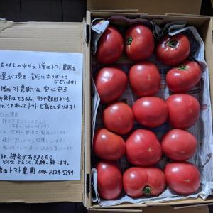 ふるさと納税、トマト4kg届きました
