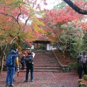 「紅葉の安楽寺」〜哲学の道沿いに佇む、石段を覆い尽くす紅葉が素晴らしい期間限定の穴場的なお寺✨