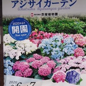 梅雨の合間の晴れの日・平日休みは、アジサイガーデンと植物園に行って来た(*^ー^)ノ♪