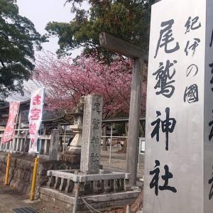 「尾鷲神社」〜ヤーヤ祭りと巨大な楠で有名な尾鷲七郷の総鎮守✨