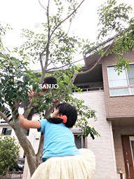 木登りってしたことある?