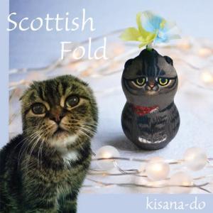 ひょうたんねこのスコティッシュフォールドきじトラさん