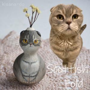 ひょうたんねこの耳折れスコティッシュフォールドさん