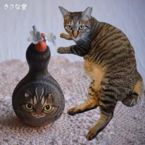 ひょうたんねこのキジトラさん