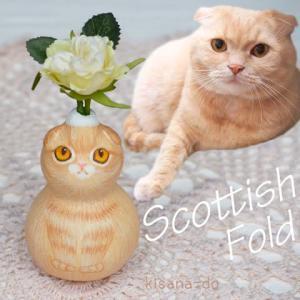 ひょうたんねこのスコティッシュフォールドさん