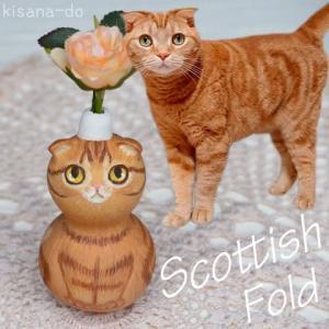 スコティッシュフォールドのレッドタビーさん