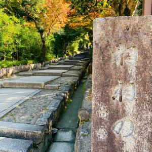 紅葉  in  京都①