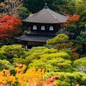 紅葉  in  京都②