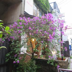 シバヤンジ横丁&銅座・熱烈厨房の長崎やきそば。梅雨とコロナの長崎歩き