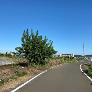 東京都日野市西平山の秋の景色 上村用水&川北用水(農業用水)沿いを歩く