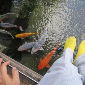 水都島原 鯉の泳ぐまち  清流亭、しまばら湧水館、湧水庭園 四明荘