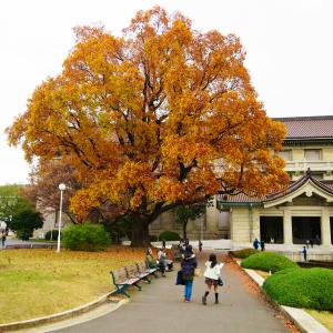 【樹木・花木 決定版!】おすすめ樹木・花木ブログ記事一覧 木の写真たくさん有♪♪