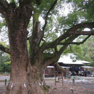 諫早神社のクス群と本明川の飛び石 - 長崎県諫早市の観光名所