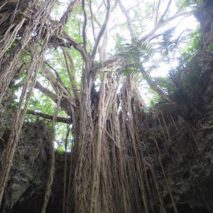 大主ガジュマル - ガンガラーの谷のガジュマルの大樹の神々しさが圧倒的!