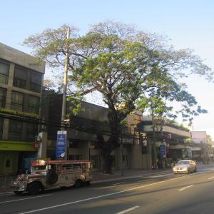 気持ちいいマニラの朝。マカティ散歩でアーナイズ通りを歩く