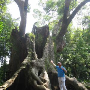 佐賀の巨木!樹齢2000年の巨樹・塚崎の大楠と圧巻の武雄図書館へ