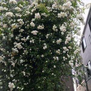 春の花々①
