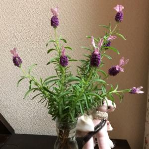 春の花々②